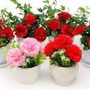 어버이날선물 비누꽃카네이션 공기정화식물 가정의달